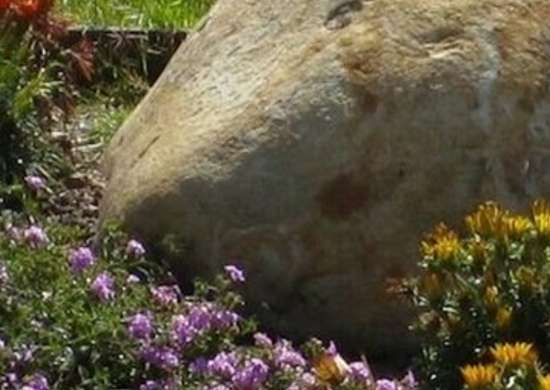 Garden Boulders Backyard Makeovers 7 Budget Friendly Tips and