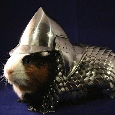 Guineapigarmor ebay.com