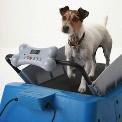 Dogtreadmill things4yourdo.com