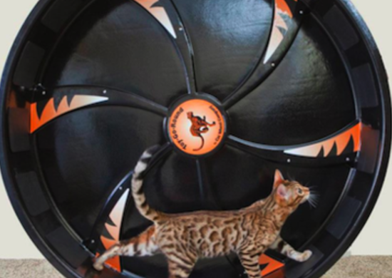 Catexercisewheel thefancy.com