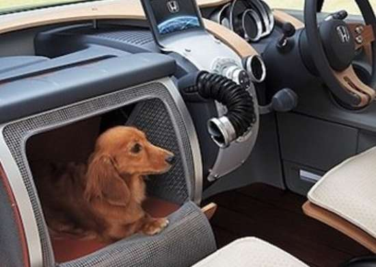 Dog Car Carrier