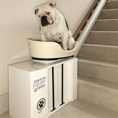 Dogstairlift dvice.com