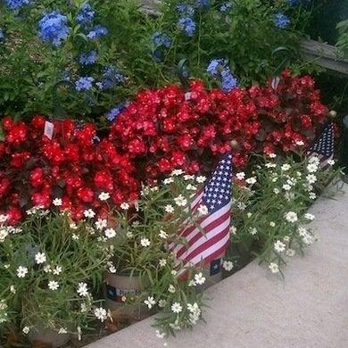 Patriotic-garden-walk