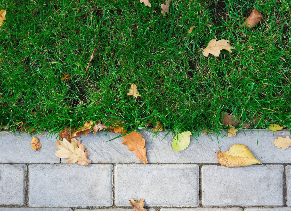 When Fall Comes Youll Need To Add A Few New Tasks To Your Lawn Care Routine Scratch Up Bare Patches And Put Down Some New Seed To Fill Them In For Next