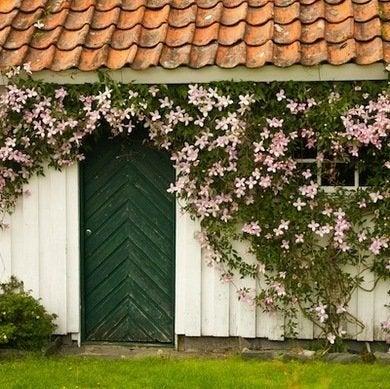 Flowering-vines
