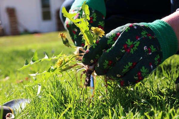 Natural Weed Killer - 9 Ways to a No-Weeds Garden - Bob Vila