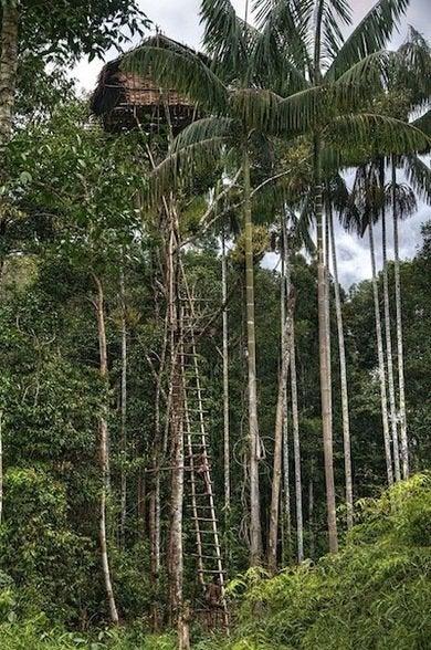 Korowai-tribe-treehouse