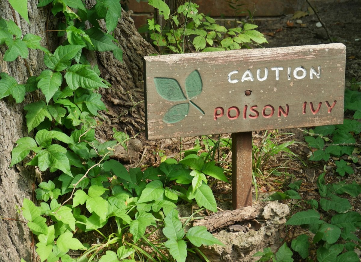 10 pretty plants you didnt know were poisonous bob vila but even more sinister plants might be lurking in your garden hiding behind fragrant flowers and beautiful mightylinksfo