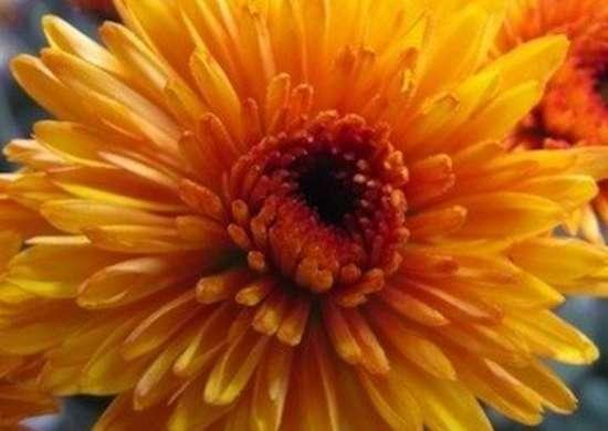 Rutgers leslie.blogspot.com mums