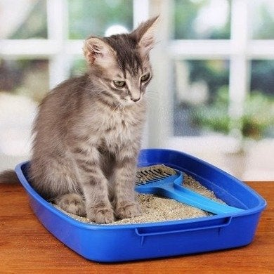 Cat in litter box caster