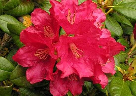 Elviira botgardennl.blogspot.com
