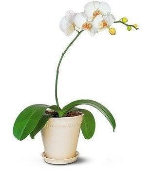 Orchidpictures.net