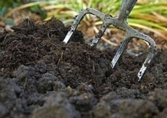 Compost to Grow