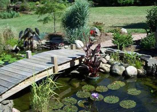 A Balanced Ecosystem Is Created By Adding Koi Which Thrive With Proper Care In Deeper Backyard Ponds