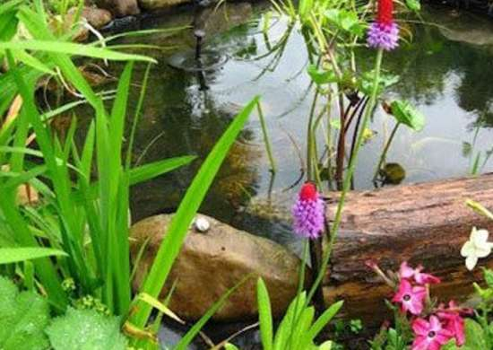 Backyard Ponds - 10 Stunning Water Feature Designs - Bob Vila on about me design ideas, home staging design ideas, backyard pond liner ideas, backyard walls ideas, backyard construction ideas, backyard pond projects, backyard sod ideas, backyard drainage ideas, backyard grading ideas, lifestyle design ideas, backyard goldfish pond ideas, backyard gardening ideas, backyard home ideas, backyard fountains ideas, patio design ideas, backyard ponds and waterfalls ideas, yard pond ideas, travel design ideas, home and garden design ideas, family design ideas,