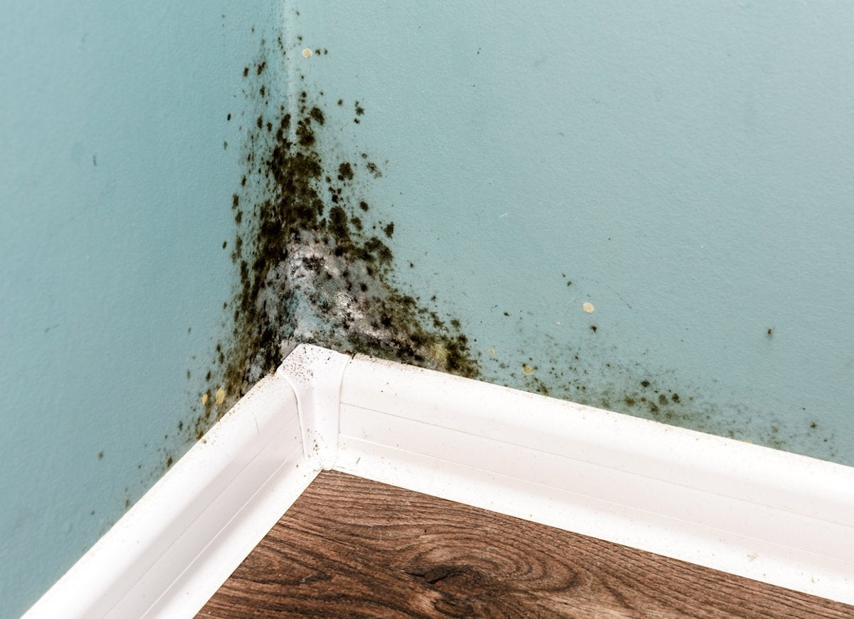 Sometimes It Can Be Detected By Scent But Oftentimes Is Odorless Some Of The Most Common Types Mold Found In Homes Include Alternaria Aspergillus