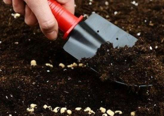 Plant Vegetable Seeds