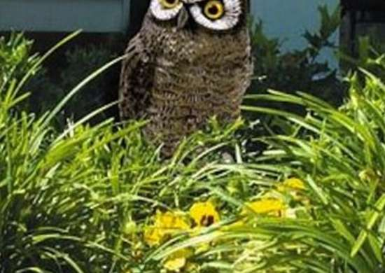 Garden Owl High Tech Gardening Tools 10 Cool New Products