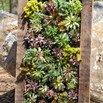 Succulent Frame Planter
