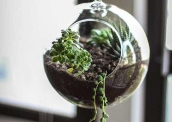 Succulent Terrarium Succulent Planter Ideas 11