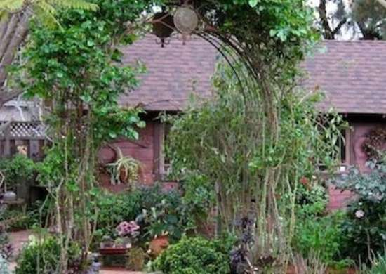Edible Garden - Lawn Alternatives - 10 Ways to Keep Off ...