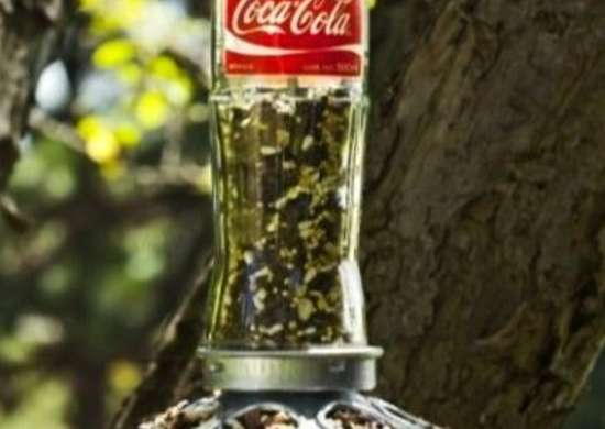 Coke Bottle Bird Feeder