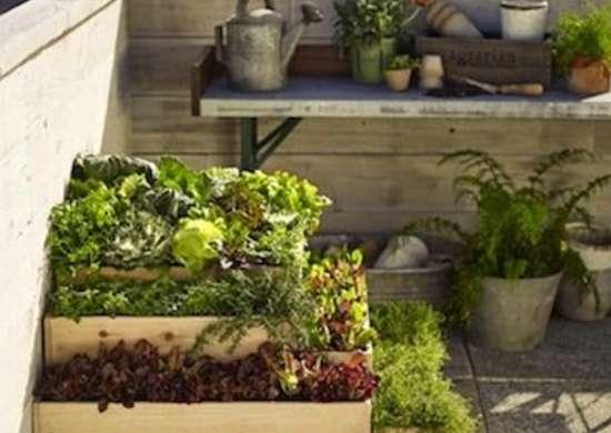 Rooftop Container Garden