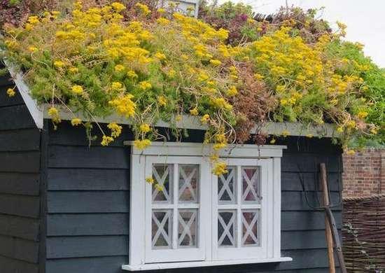 Rooftop Flower Garden
