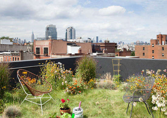 Rooftop Meadow